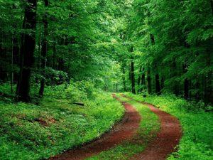 PRIMIM LA REDACȚIE:  În Transilvania a început bătălia pentru obţinerea controlului  asupra ariilor naturale protejate