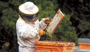 Înscrieri la curs de apicultură