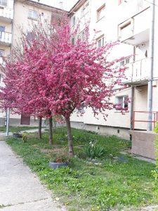 Primăria Sfântu Gheorghe organizează un concurs pentru desemnarea celei mai frumoase zone rezidenţiale