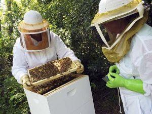 Ajutor de minimis de 20 de lei pe familia de albine pentru compensarea pierderilor din primăvara acestui an (proiect)