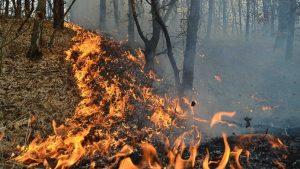 Incendiu de pădure în zona Mereni; 20 de focare stinse în aproape şase ore