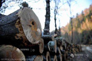 Romsilva invită organizaţiile de mediu să participe la verificările efectuate la ocoalele silvice care administrează pădurile statului