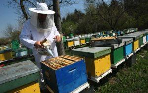 Sprijin pentru apicultori. Dosarele se depun la Direcția pentru Agricultură