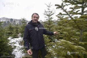 Mihăilescu (Romsilva): În România sunt tăieri neautorizate de pădure şi cine neagă acest lucru nu cunoaşte realitatea românească