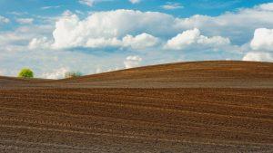 Ministrul Oros: Alocăm terenuri pentru tinerii fermieri