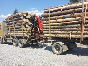 Comisia Europeană avertizează România să pună capăt exploatării forestiere ilegale