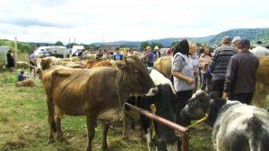 Se redeschid târgurile de animale? Anunțul făcut de șeful ANSVSA