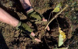 """8500 de puieți vor fi plantați prin programele """"Poarta de Soare"""" și """"Un copac pentru generaţia următoare"""""""