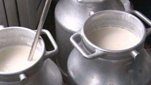 Peste 20 de sancţiuni pentru nereguli în producerea, colectarea şi procesarea laptelui; două autorizaţii suspendate