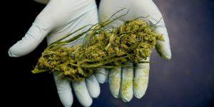 Tânăr arestat preventiv pentru trafic şi deţinere de droguri
