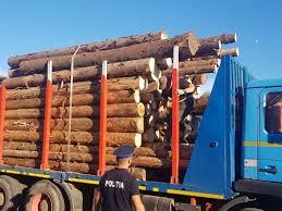 Senat/ Închisoare de la 5 la 10 ani pentru scoaterea din ţară a produselor agricole şi de masă lemnoasă, adoptat