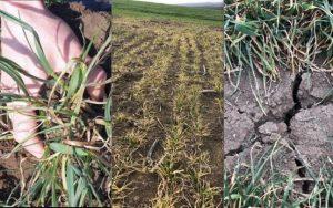 Dumitru (MADR): O să acordăm o sumă forfetară fiecărui fermier care a suferit pierderi generate de secetă