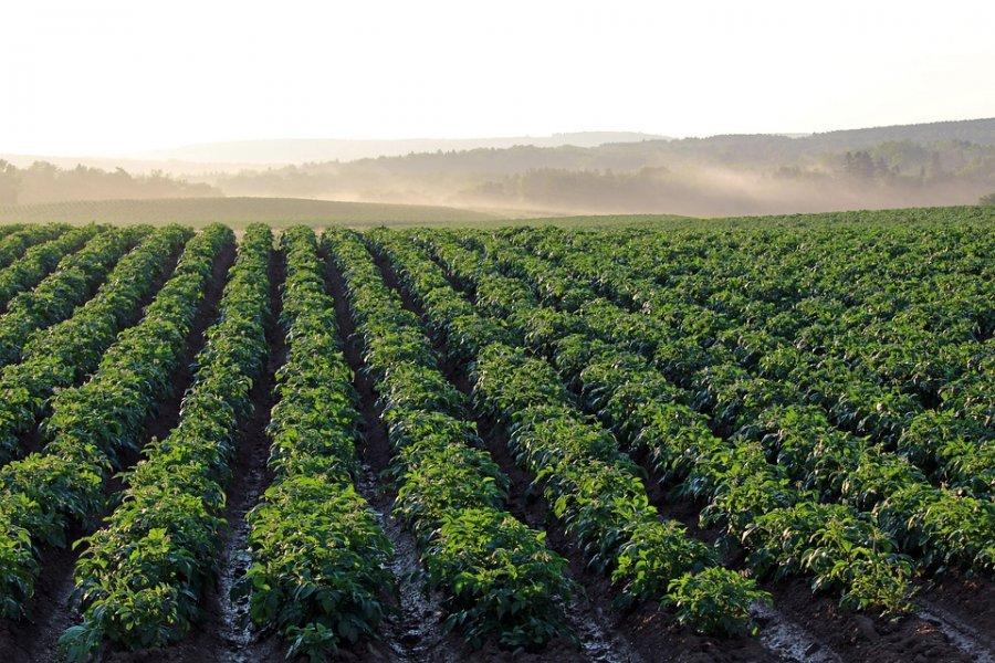 Perioada de valorificare a tomatelor obținute în spații protejate, prelungită