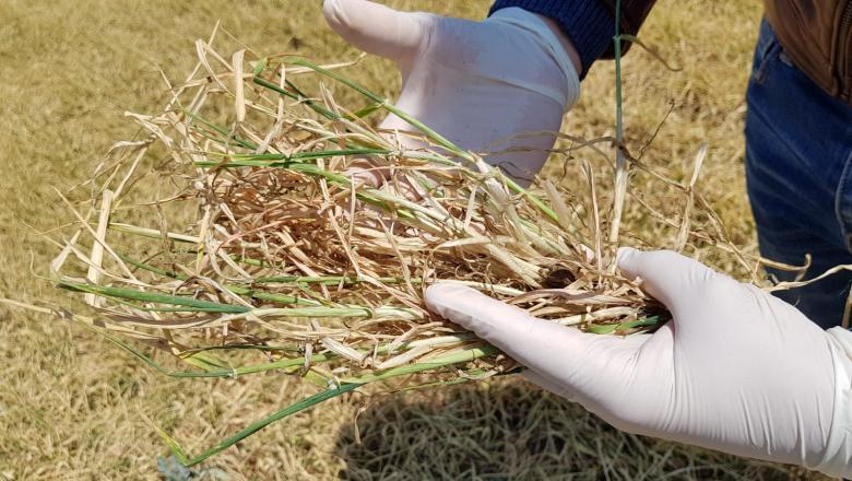 Tabără (ASAS): Pierderea medie a producţiei pe ţară la culturile de toamnă depăşeşte 30%; la pomii fructiferi timpurii se duce până la 70%