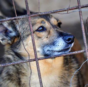 Adăpost pentru câini fără stăpân, amendat pentru că nu era înregistrat; animalele vor fi mutate