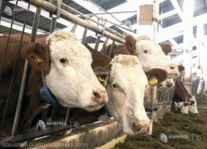 APIA: Cererile de plată ale crescătorilor de animale pentru decembrie şi pentru trimestrul IV au termen de depunere 29 ianuarie